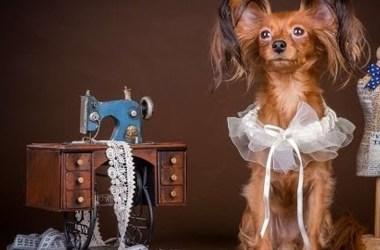 Какой бывает одежда для собак?