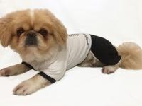Костюм для собаки Briuty-017