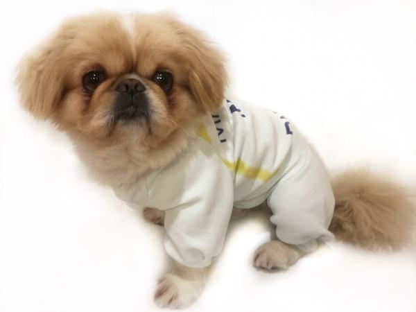 Костюм для собаки №19-018